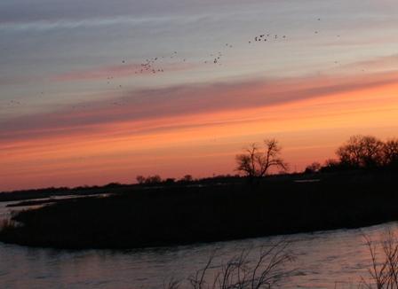 Crane migration in central Nebraska Copyright 2010 by R.O. & R.A. Robbins
