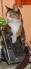 Cat's Meow Answering Service