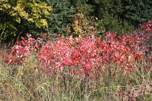 Fall at Chalco #28 Copyright 2013 by R.A. Robbins