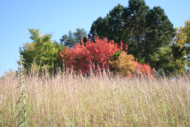 Fall at Chalco #3 Copyright 2013 by R.A. Robbins