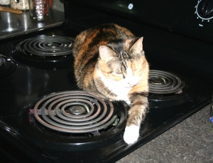 Kitty on Stove Copyright 2014 R.A. Robbins