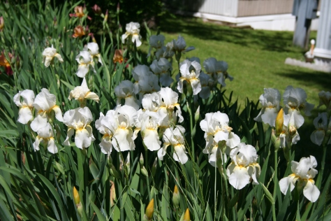 White Iris Group Copyright 2015 by R.A. Robbins